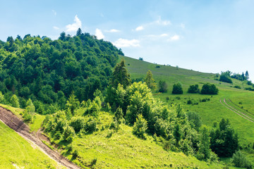 path uphill in to the mountains. summer countryside landscape. grassy meadow and forest on the slope in dappled light