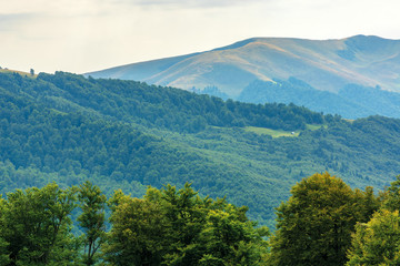 primeval beech forests of carpathian mountains. beautiful late summer landscape in afternoon. svydovets ridge in the distance.