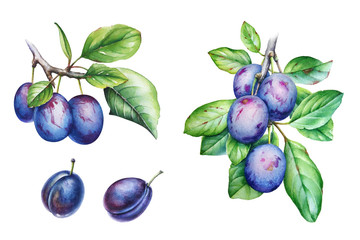 Collection of watercolor plum tree branches with green leaves and fruits