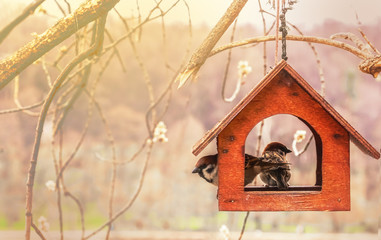 Sparrows in wooden feeding trough. are for birds. Handmade birdhouse.