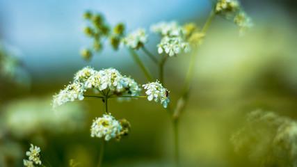 Fleur blanche dans la foret