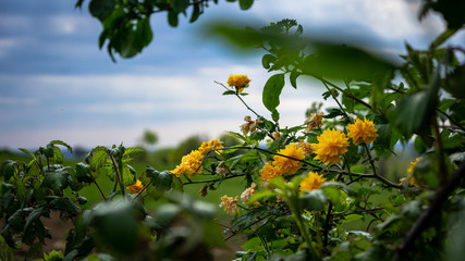 Yellow flower in the landscape
