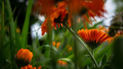 orange flower in the forest