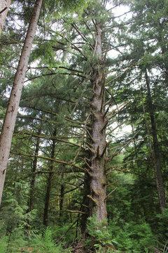 trees on pacific coast oregon