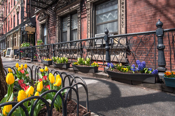 Bright tulips adorn the sidewalks of Greenwich Village on a crisp spring morning