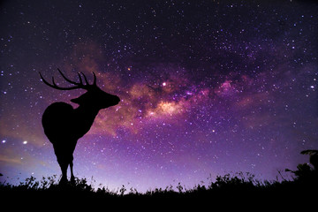 Canvas Prints Violet The deer image stands in the Milky Way constellation.