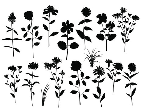 Set of silhouettes of flowers and grass, rose, chamomile, dandelion, black color, isolated on white background