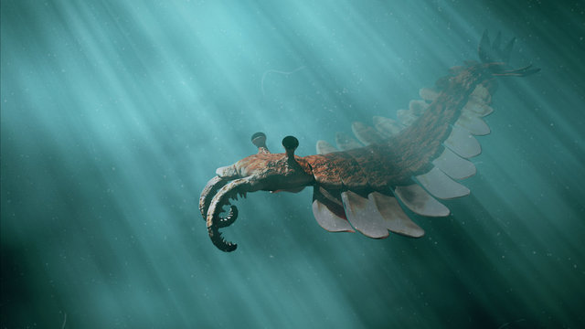 Anomalocaris, prehistoric creature of the Cambrian period (3d science illustration)