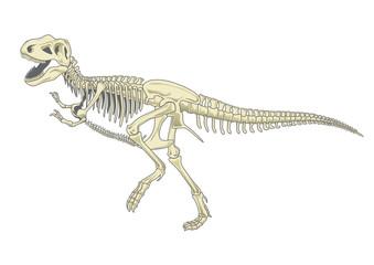 illustration of tyrannosaurus T rex skeleton