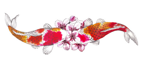 .Carp, Koi, Fish and sakura flowers painted watercolor