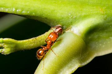 Macro ants on plants