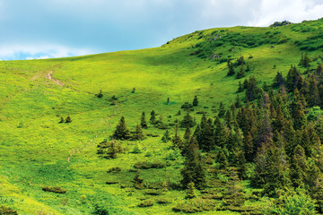 footpath up the hill in summer. beautiful nature scenery on a sunny day. coniferous forest on the slope. hiking tourism background. goal achievement concept