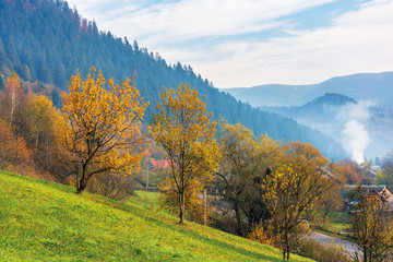orchard on a grassy hill in the rural valley. trees in golden foliage. distant forest in fog. village near the road. beautiful autumn scenery in mountains. wonderful sunny weather, blue sky with cloud
