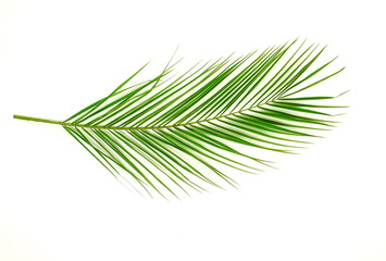 tropical green palm leaf on a white background. minimal floral concept. top view.copy space. Wall mural