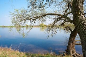 Elbauenlandschaft am Ufer des Flusses Elbe bei Magdeburg