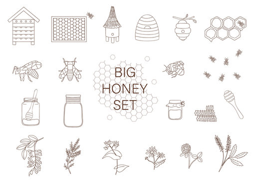 Vector black and white set of honey, bee, bumblebee, beehive, wasp, apiary, meadow flowers, honeycombs, propolis, jar, spoon. Monochrome honey collection isolated on white background.