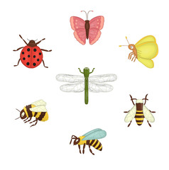 Vector set of colored insects. Collection of isolated on white background bee, bumblebee, moth, butterfly, ladybug, dragonfly, wasp,