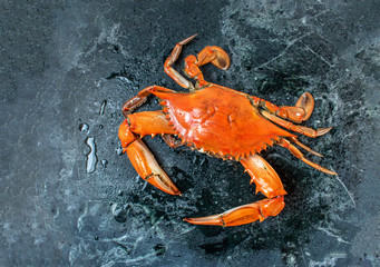 isolated steamed whole blue crab on wet marble background flat lay