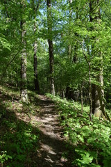 Natchez Trace National Scenic Trail in Mississippi
