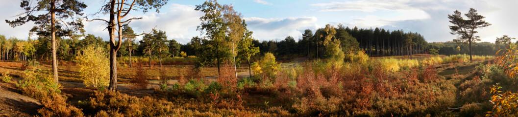 UK, Surrey autumn panorama