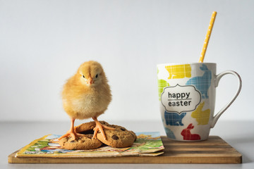 Cute Chick near cookies, Happy Easter picture