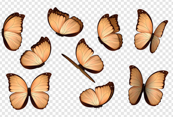Butterfly vector. Peach colour isolated butterflies.