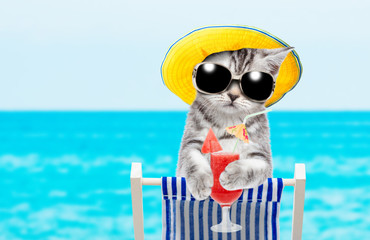 Kitten resting on a deck chair in the beach with tropical cocktail. Space for text