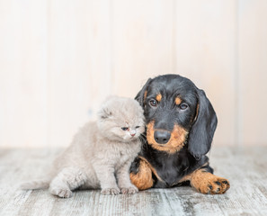 Cute baby kitten sitting with dachshund puppy on the floor at home