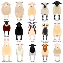 sheep chart with breeds name