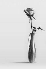 One blooming rose in a wooden vase on gray background. Black and white image