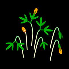 Microgreens Cress. Bunch of plants. Black background