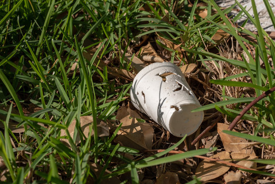 styrofoam cup in some grass in a park , cup right hand side of image