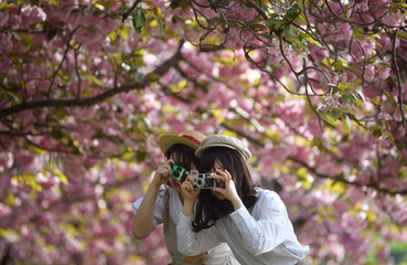 Two women pose for a friend as they take pictures amongst cherry blossom in Greenwich in London
