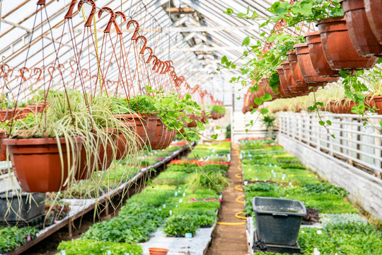 Greenhouse, cultivation of plants and flowers
