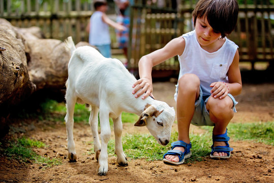 Preschool boy, petting little goat in the kids farm. Cute kind child feeding animals