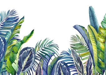 Jungle wallpaper with tropical palm, banana and calathea leaves. Isolated watercolor background.