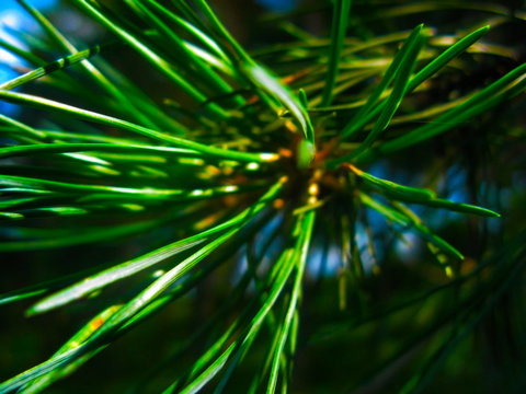 Sun needles in the wood