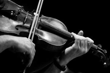 Wall Mural - Violin in the hands of a musician close-up in black and white