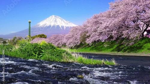Wall mural Cherry blossoms and Fuji mountains at Shizuoka, Japan