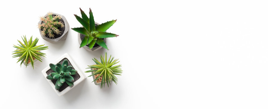 Different succulent and cacti plants in pots on white background