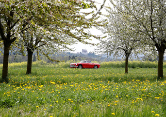 People drive in a vintage MGB roadster car past blossoming cherry trees during sunny weather as Schloss Wildegg castle is pictured in the background near Schinznach-Dorf