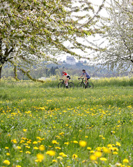 People cycle past blossoming cherry trees during sunny weather as Schloss Wildegg castle is pictured in the background near Schinznach-Dorf