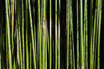 Poster Bamboe Bamboo forest. No people