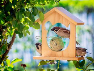 Sparrows at a feeder house