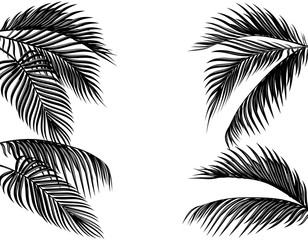 Set of black and white tropical palm leaves. Isolated on white background illustration