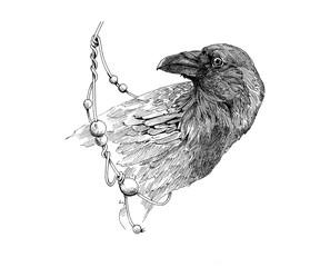 graphic raven