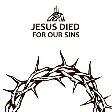 black crown of thorns image isolated on white background