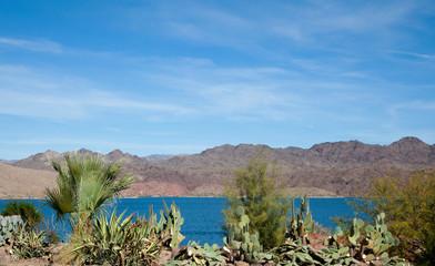 Cactus and desert plants, Lake Havasu, Arizona, US, 2017.