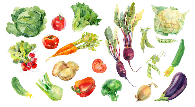 Watercolor painted collection of vegetables. Fresh colorful veggies background
