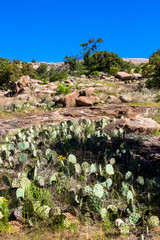 Cacti, wildflowers, and boulders at Enchanted Rock State Natural Area near Fredericksburg, Texas